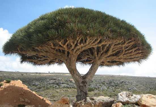10 необычных и интересных деревьев