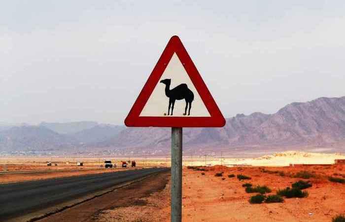 10 странных правил дорожного движения в США