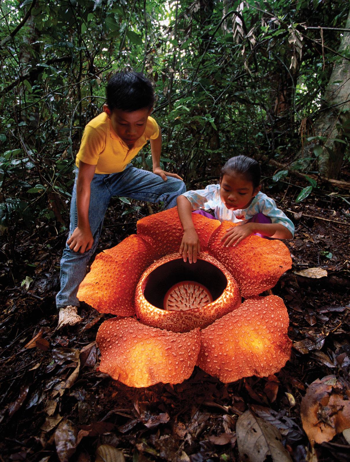 10 самых необычных цветов мира