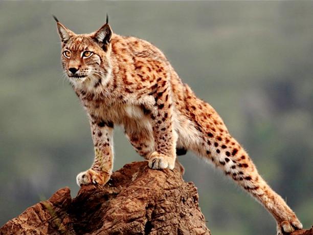 10 видов животных, которым грозит вымирание