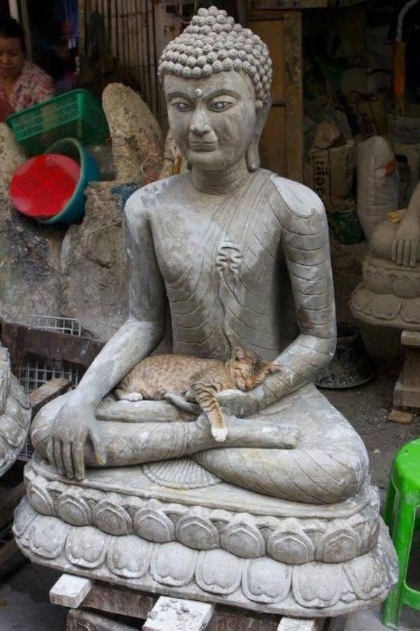 Коты — настоящие буддисты