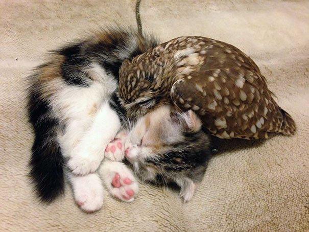 Лучшие друзья котенок и совенок