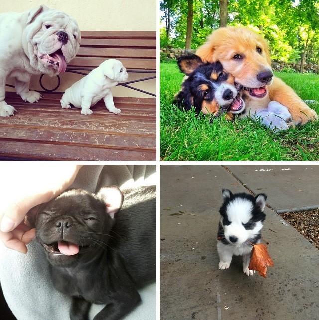 Маленькие щенки – максимально милы