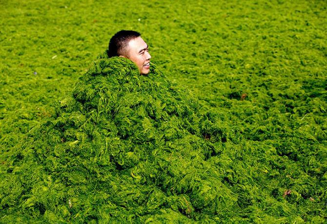 Нашествие зеленых водорослей в Китае