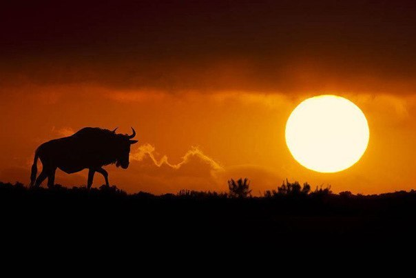 Силуэты южноафриканской саванны от Марио Морено