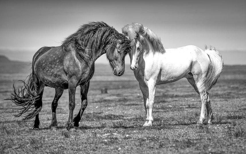 Великолепные лошади в фотографиях Керри Хендри