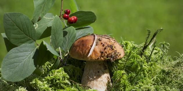 Полезные советы по правильному сбору грибов