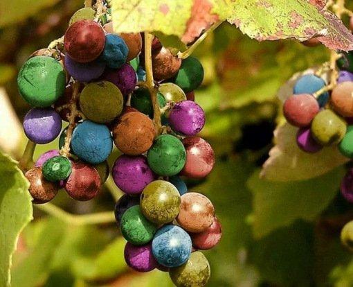 смс эротическое про виноград
