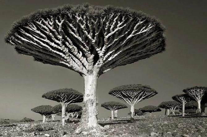 Самые древние деревья на нашей планете