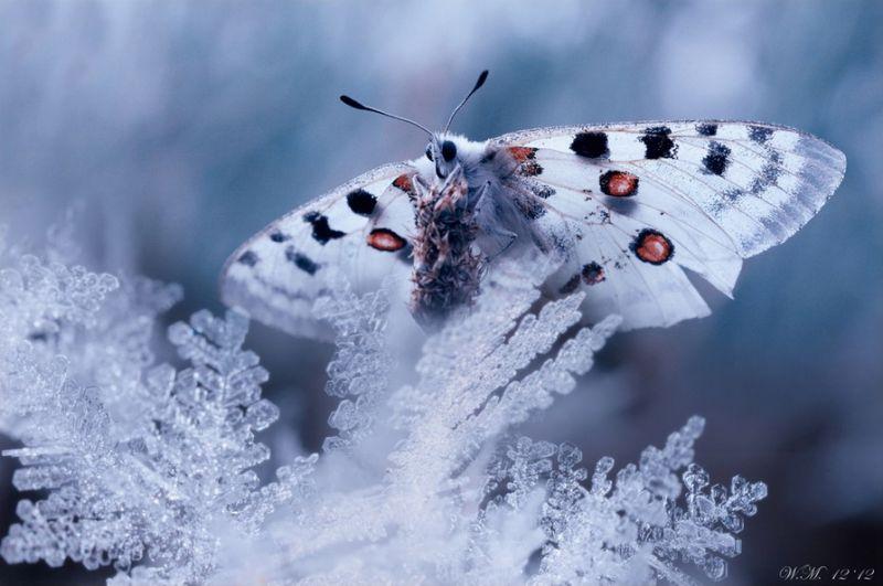 Волшебные снимки мира насекомых от Вила Мийера