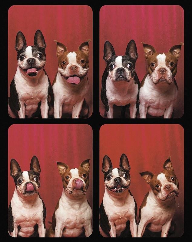 Фотографии собак из фотобудки