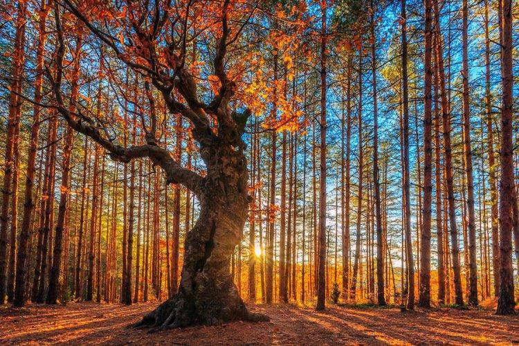Красочные HDR фотографии природы