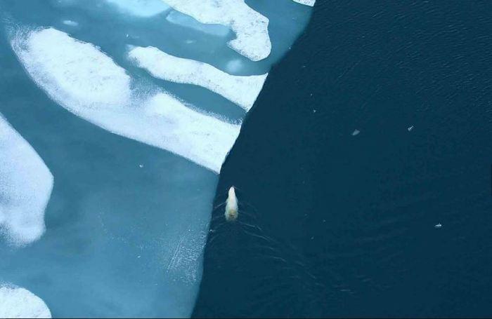 Невероятные красоты Арктики, которые могут скоро исчезнуть