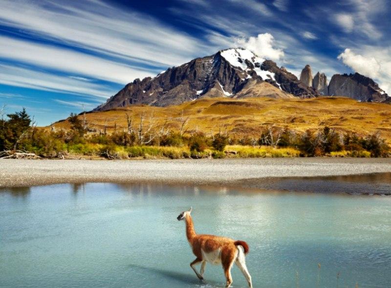 Окно в мир природы Патагонии — национальный парк Торрес дель Пайне