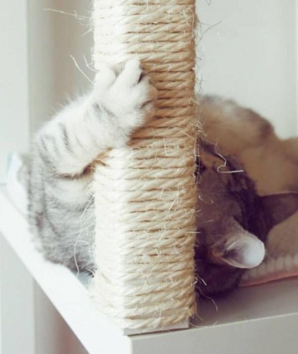 Полезные советы для хозяев кошек