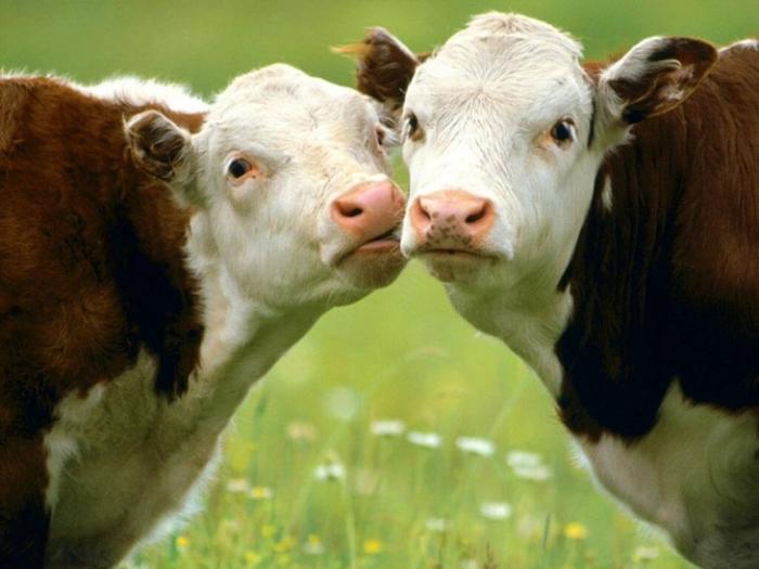 30 любопытных фактов о животных
