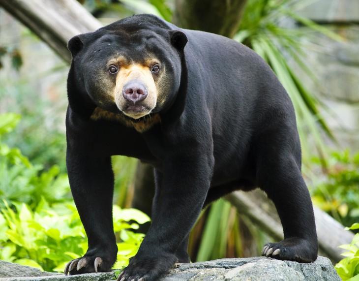 8 видов медведей, которых мы раньше не видели