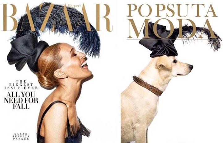 Кампания Po Psu Ta Moda помогает собакам из приюта обрести дом