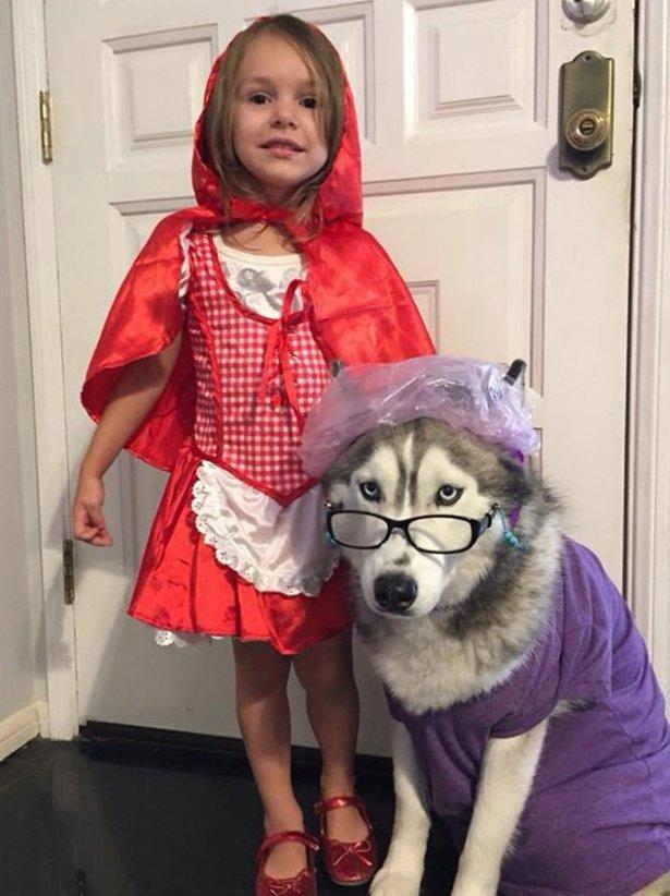 Костюмы к Хэллоуину для собак