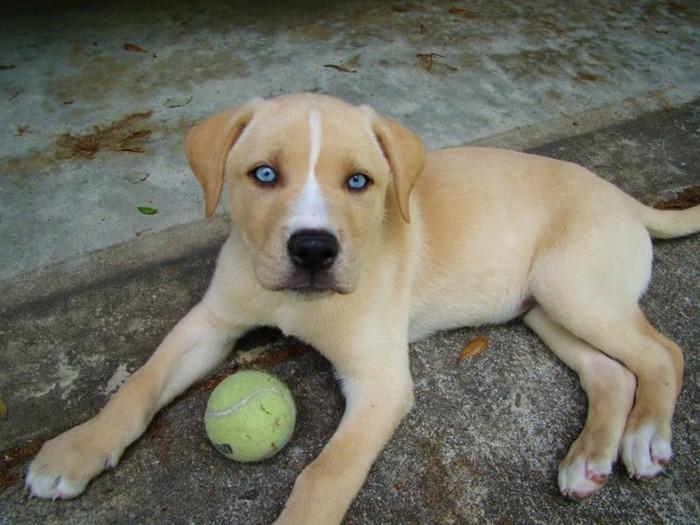 Милые и очаровательные псы-метисы, от родителей разных пород