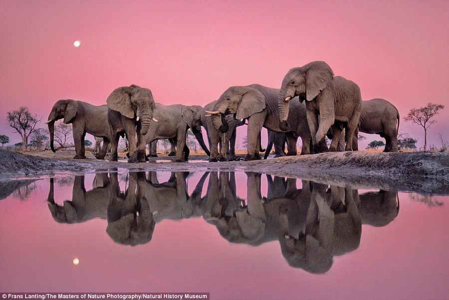 Удивительные снимки от победителей конкурса Wildlife Photographer of The Year 2015