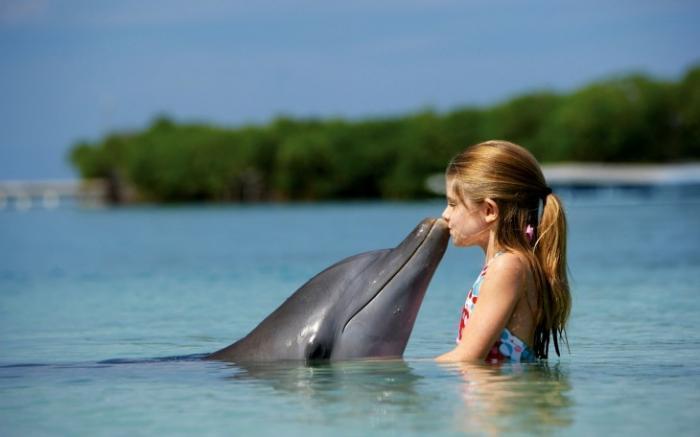 7 интересных фактов о дельфинах