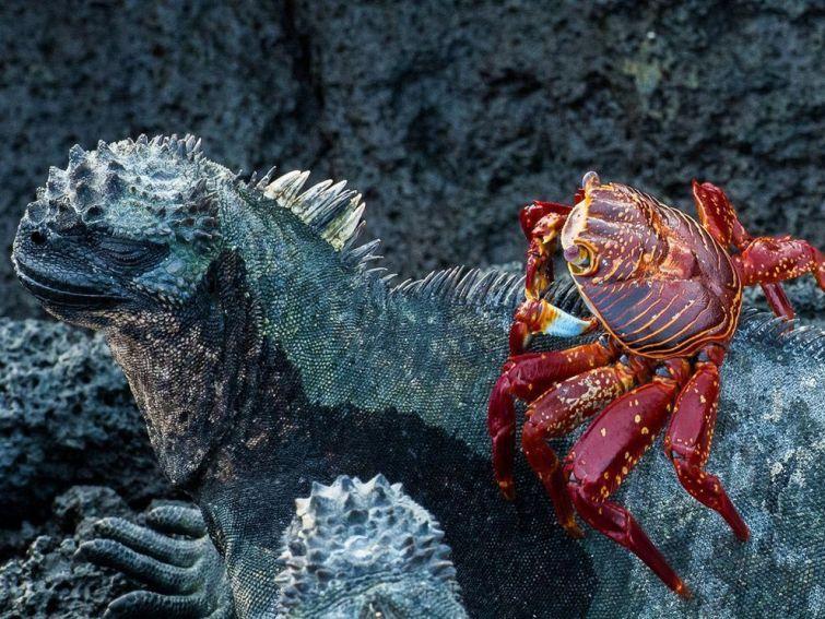 Фотографии дикой природы от National Geographic 2015