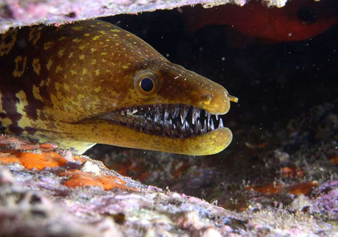 Очень страшные морские создания