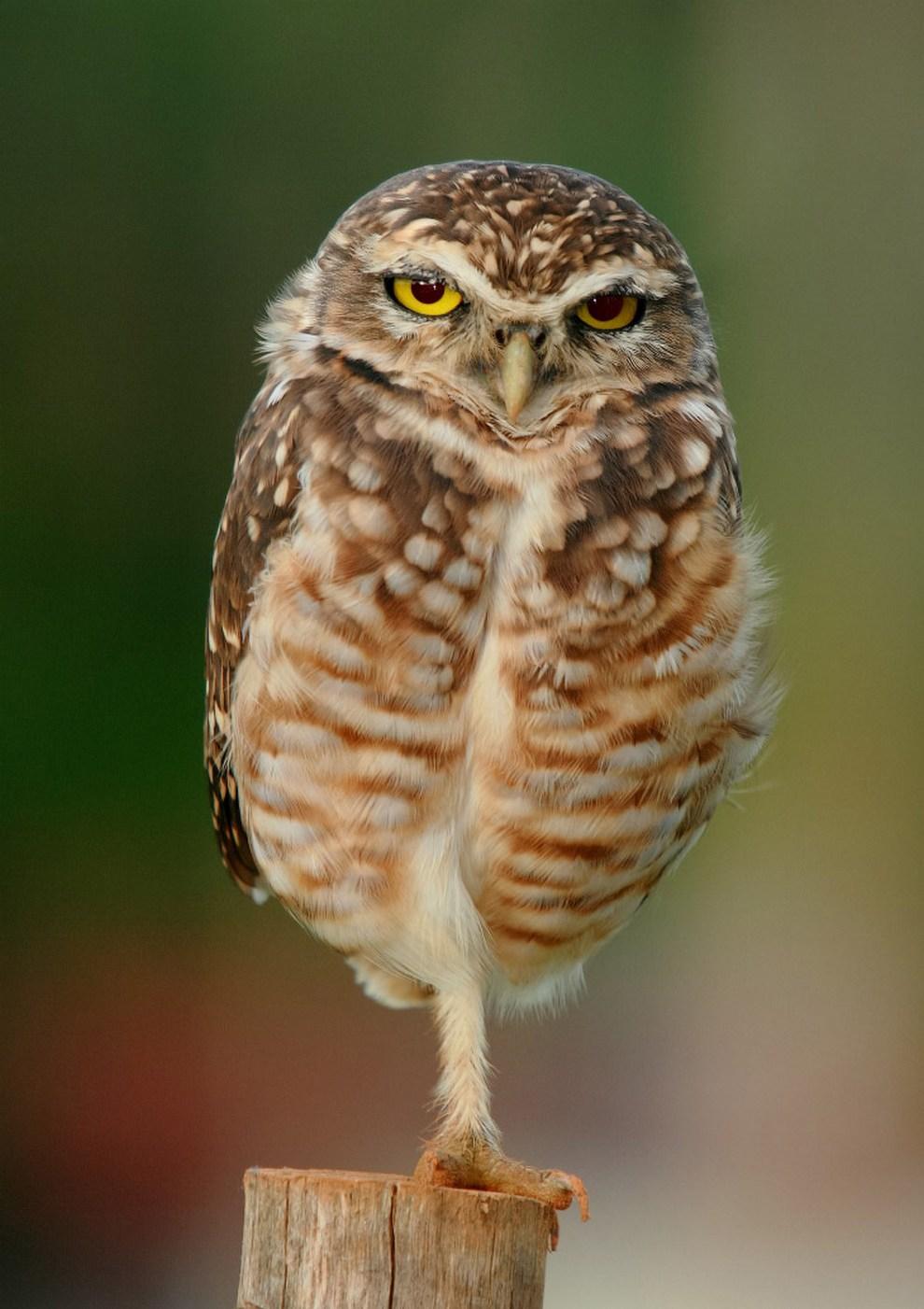 Птицы с необычными защитными механизмами