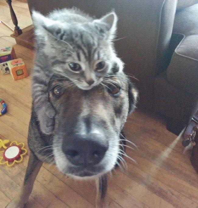 Умилительные фотографии дружбы собак и кошек