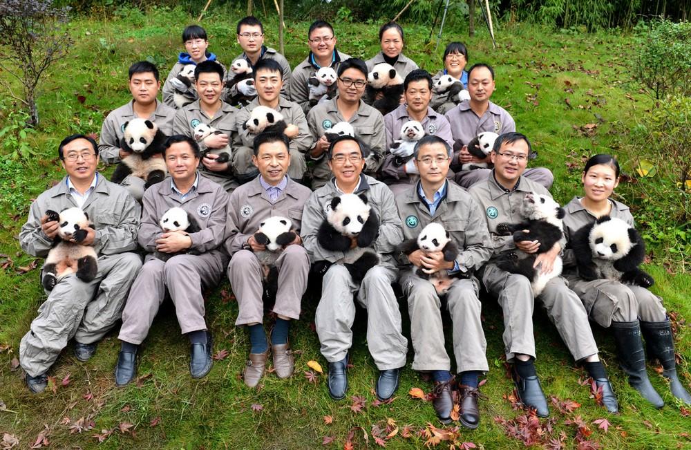 В китайском заповеднике родилось рекордное количество панд