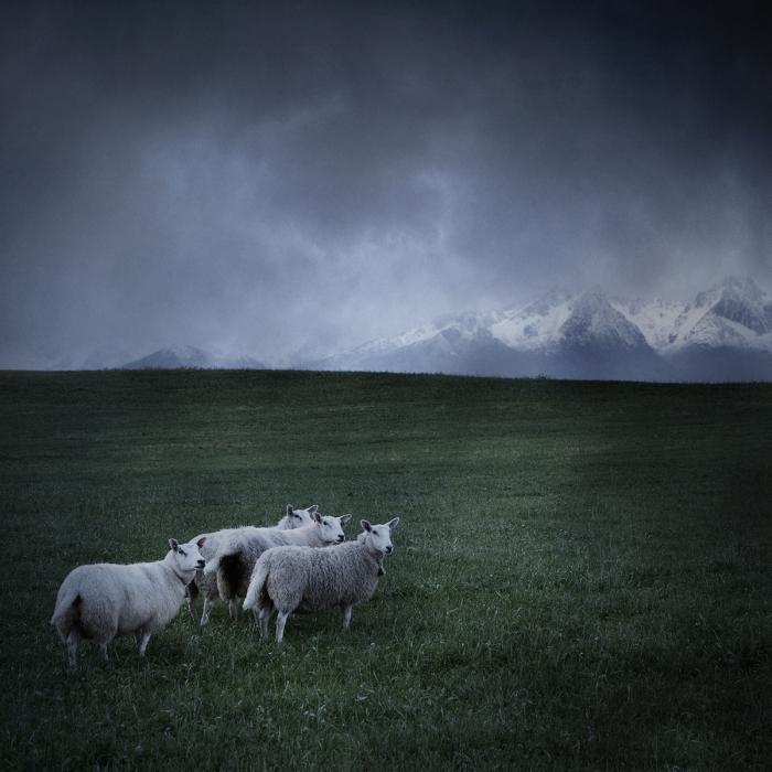 Холодные пейзажи Норвегии от Bjorg-Elise Tuppen