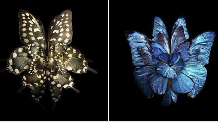 Живописные цветы из крыльев бабочек от Себа Джаниака