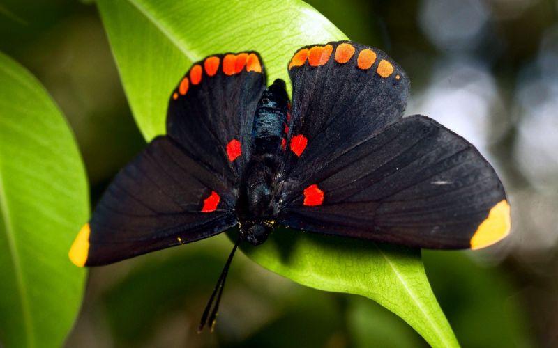 Красивые фотографии бабочек