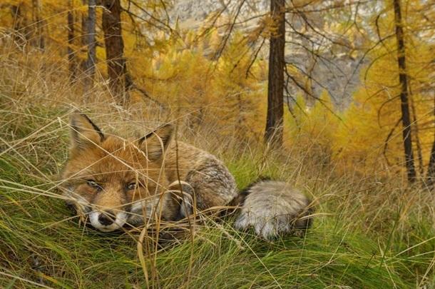 Самые яркие фотографии 2015 года от National Geographic