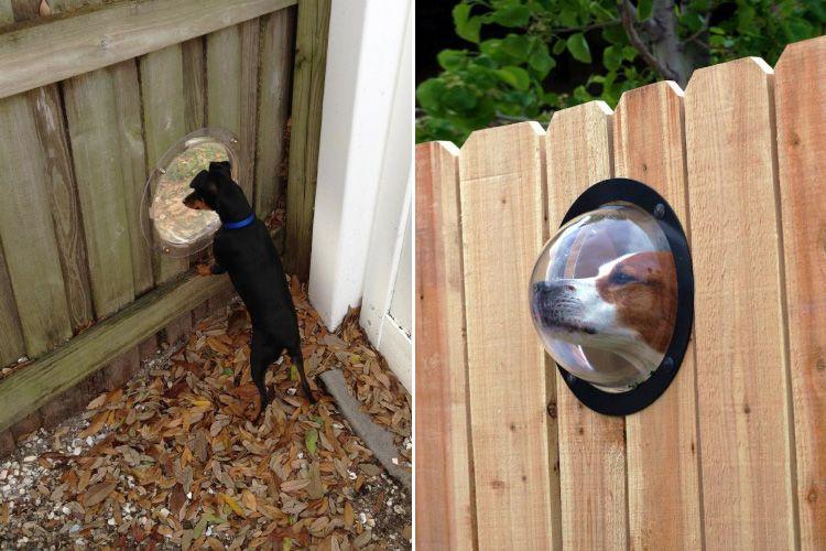 Сделай из собаки космонавта — иллюминатор для забора