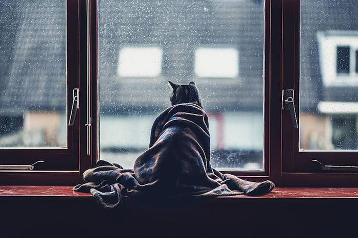 Трогательные фотографии кошек от Фелисити Берклиф