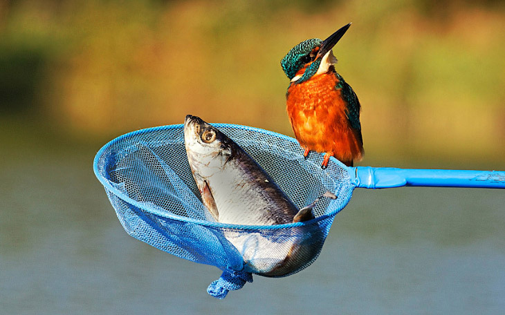 Жизнь животных на фотографиях в 2015 году