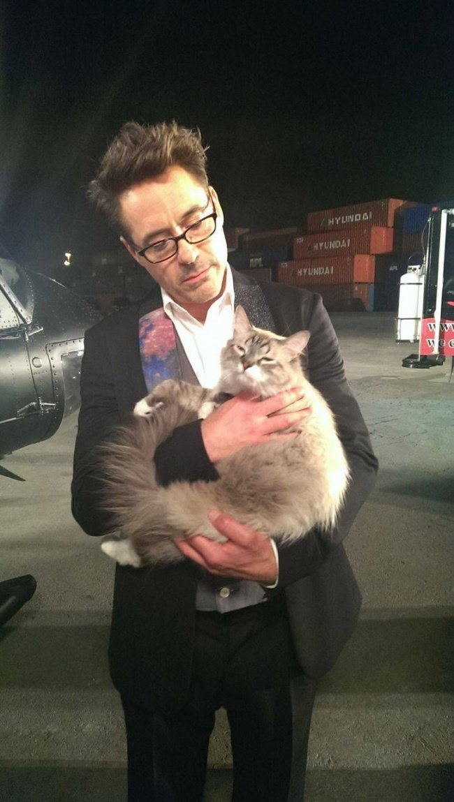 Знаменитые мужчины со своими котиками