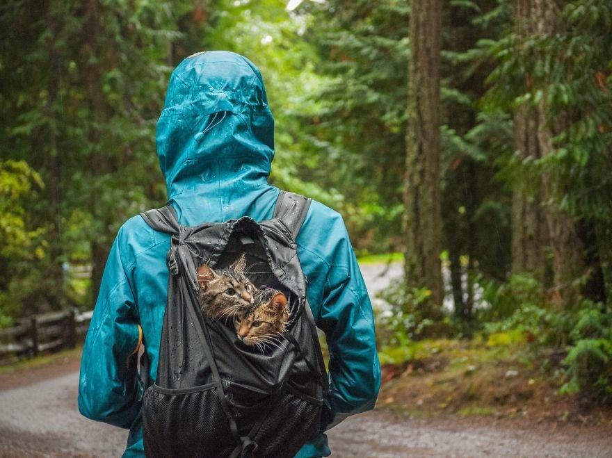 Как бездомные котята стали путешественниками