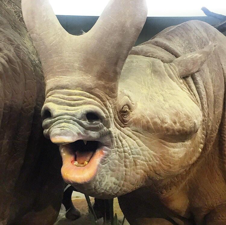 Рисунок новый, носорог картинки прикольные