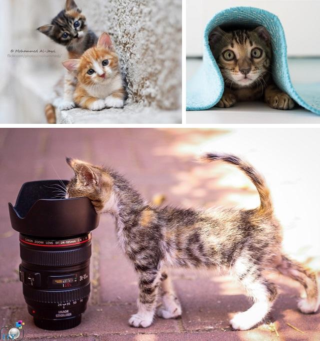 Признаки кошачьей любви