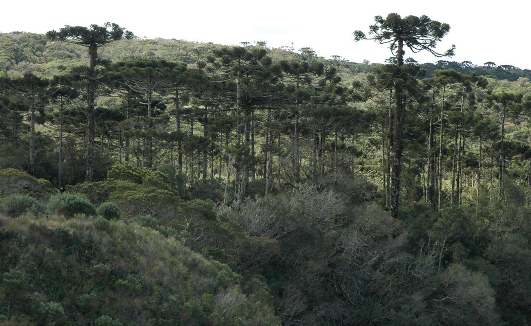 Самые древние леса нашей планеты
