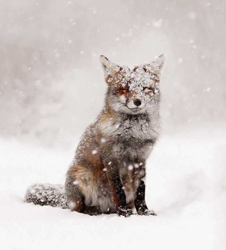 Заснеженные животные на фотографиях
