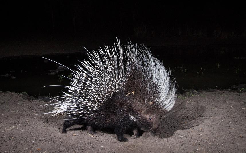 Африканские животные в естественной среде обитания на снимках с камер слежения