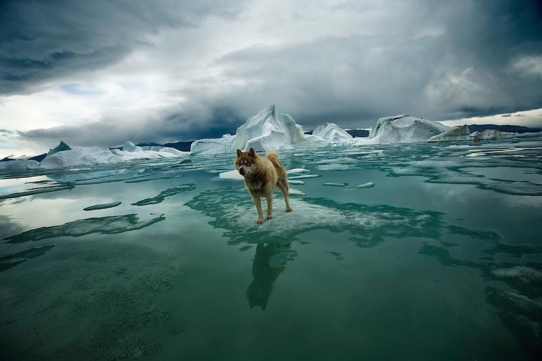 Арктика: исчезающий Север в объективе Себастьяна Коупленда