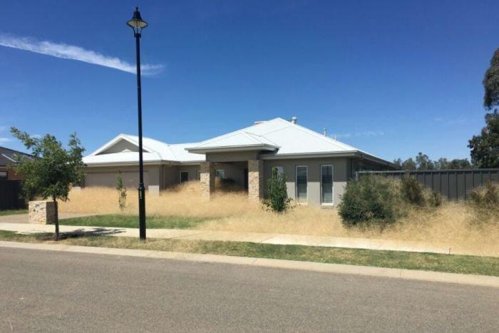 Австралийский город Вангаратта засыпает слоем сухой травы
