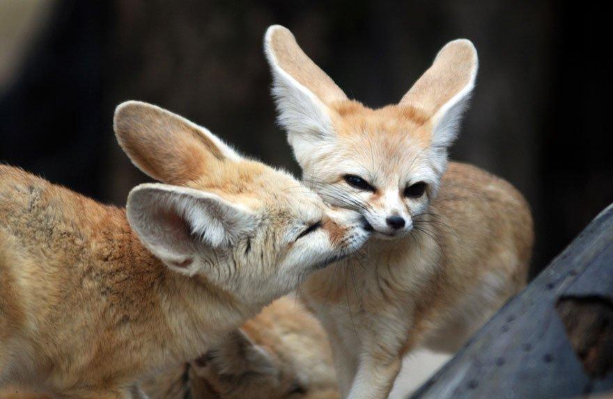 Любовь среди животных