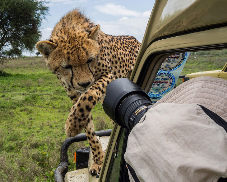 О тесном контакте фотографа с животным миром