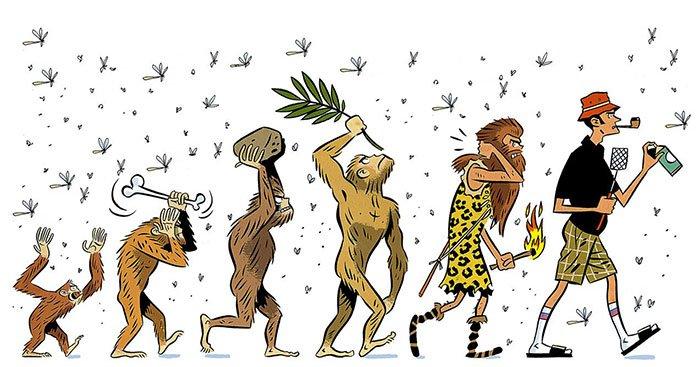 Различные формы эволюции в картинках